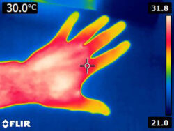 Image of hand via thermal imaging camera.